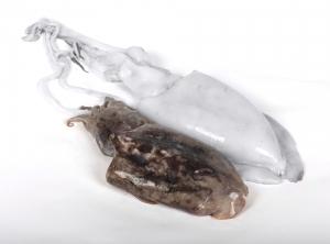 cocedero-de-mariscos-pescado-02