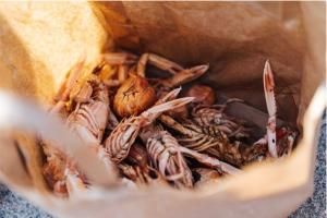 Comer pescado y marisco en nuestra dieta