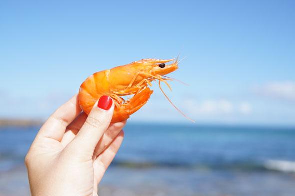 Los mariscos en la dieta mediterránea