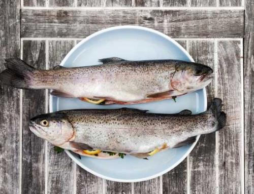 Tipos de mariscos: ¿Cuál debería ser tu primera opción?