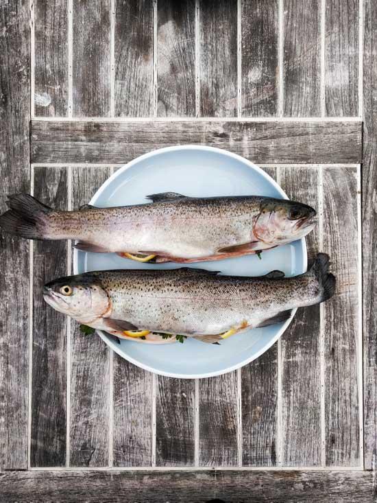 Comprar pescado y marisco congelado